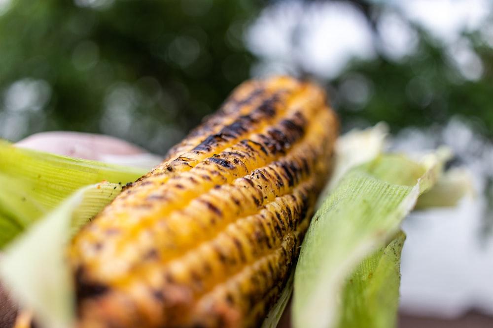 yellow corn in tilt shift lens