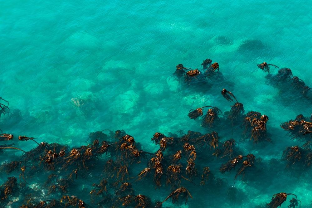 school of orange fishes in water