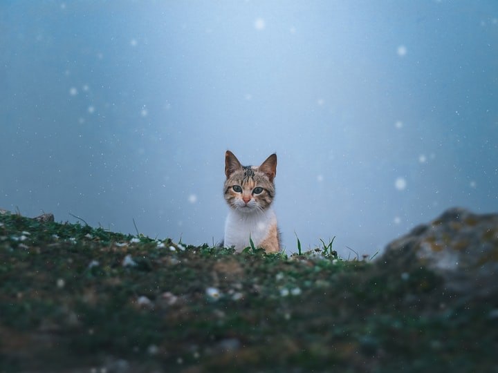 The Scuba-Diving Cat