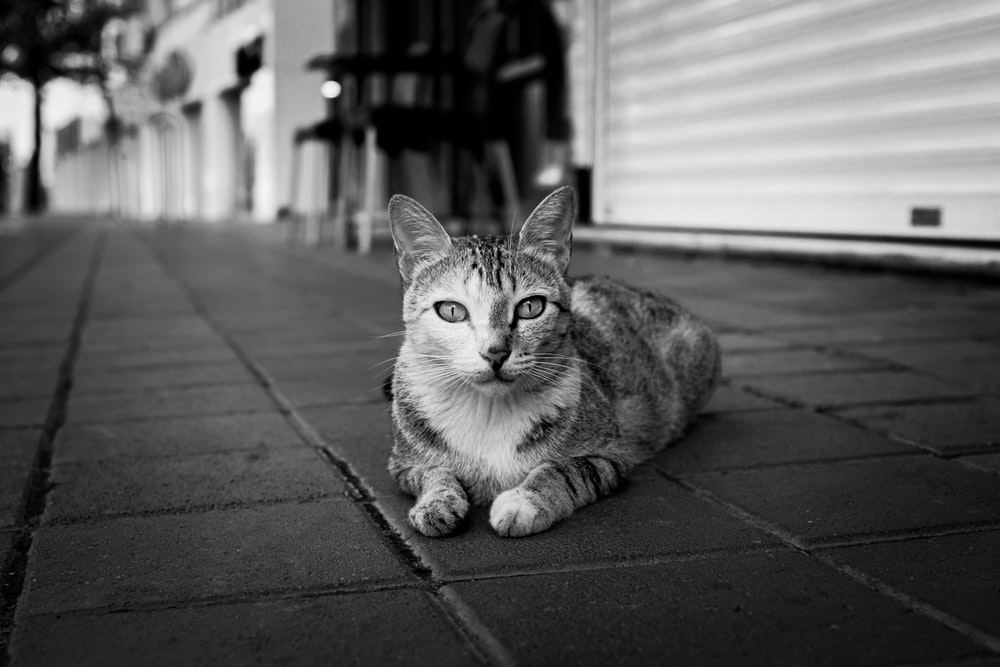 grayscale photo of tabby cat on pavement
