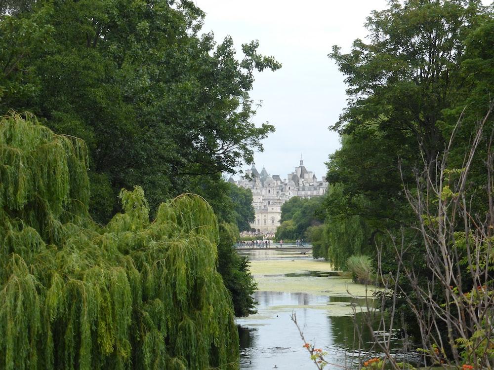 green trees beside river under white sky during daytime