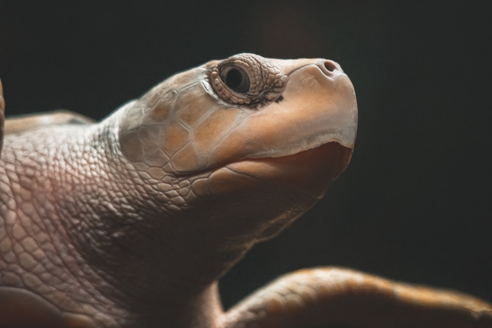 brown and black turtle in close up photography