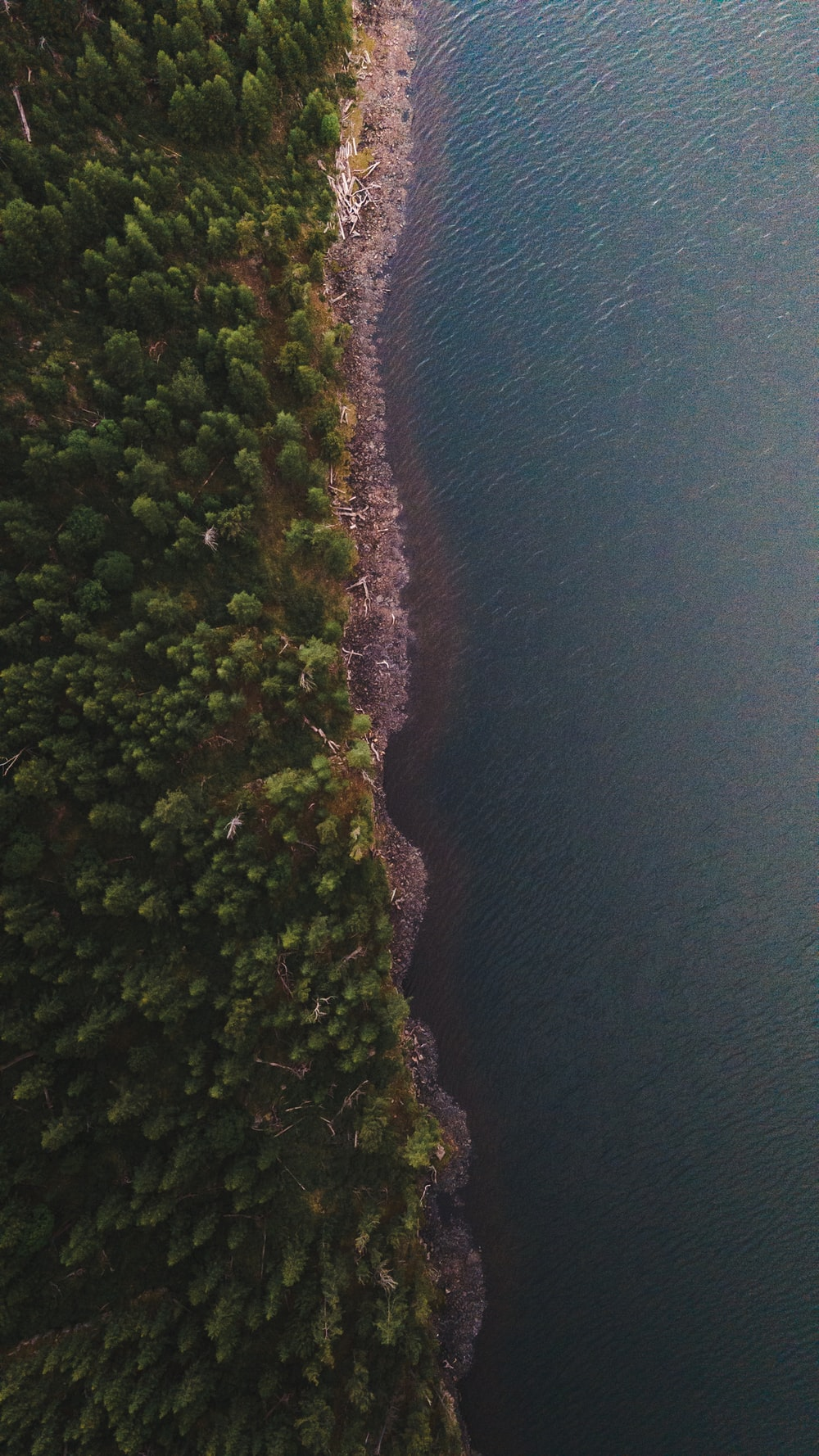 aerial view of green trees beside body of water during daytime