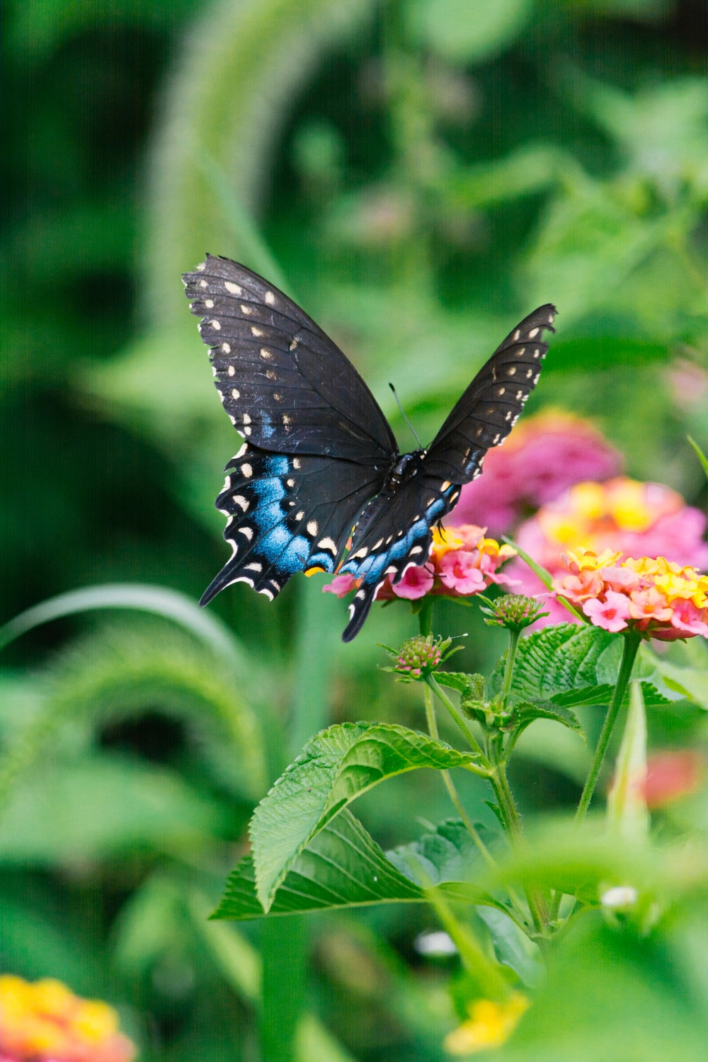 blue and black butterfly on yellow flower