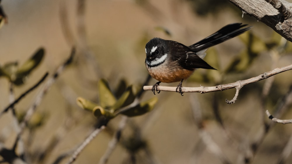 black and brown bird on tree branch