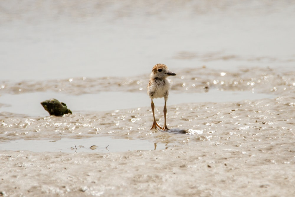 white and brown bird on beach during daytime