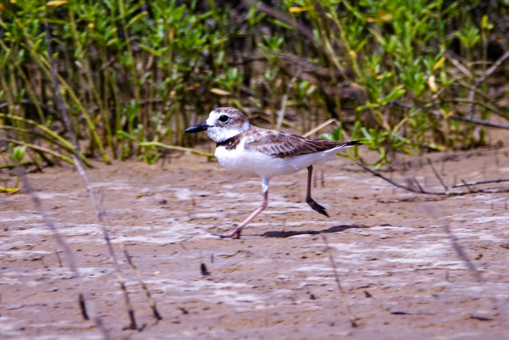 white and brown bird on brown sand during daytime