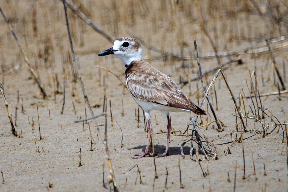 white and brown bird on brown grass during daytime