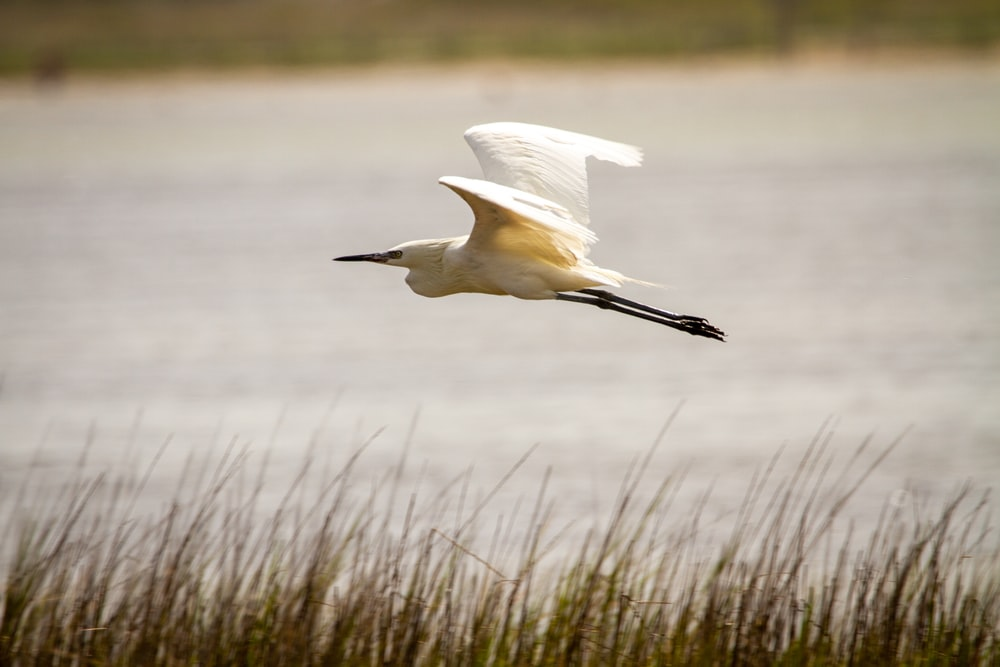 white bird flying over the body of water during daytime