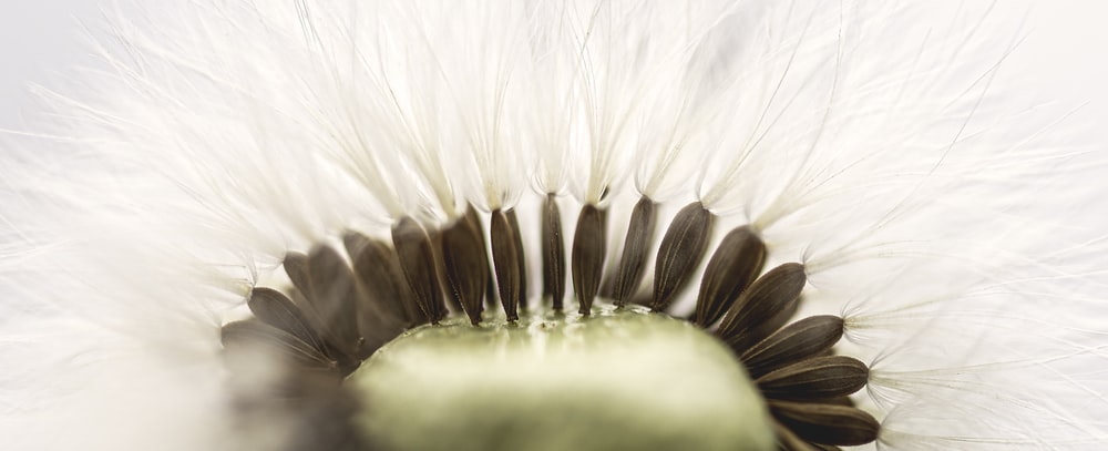 white and brown feather illustration
