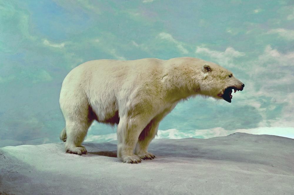 polar bear on white sand during daytime