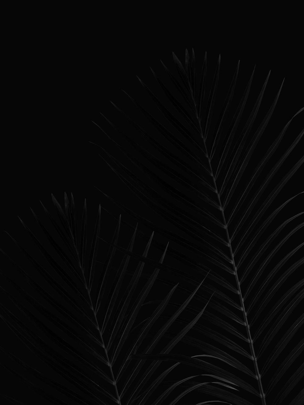 black and white leaf illustration