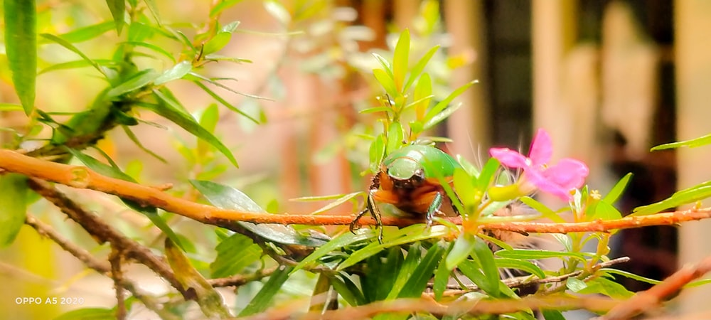 green and brown insect on green plant during daytime