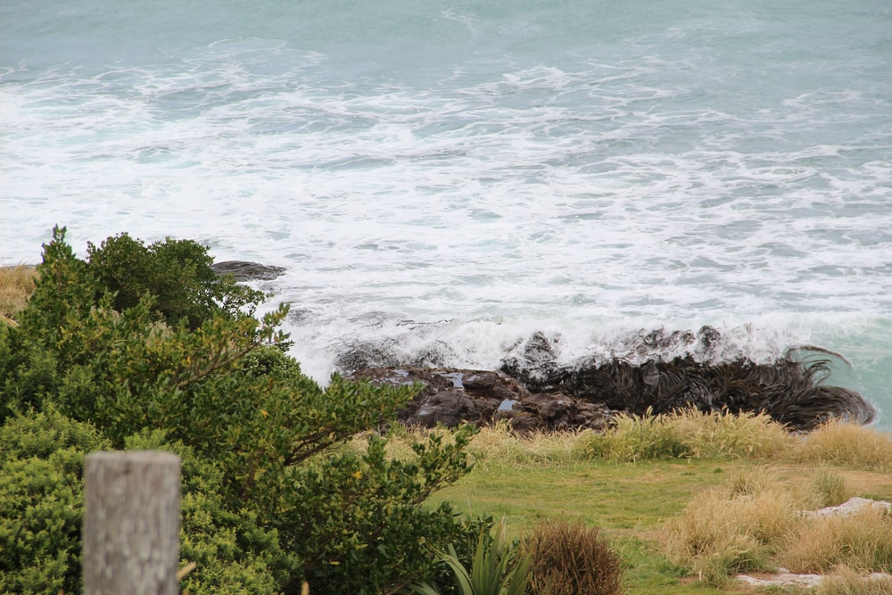 green grass near sea waves during daytime