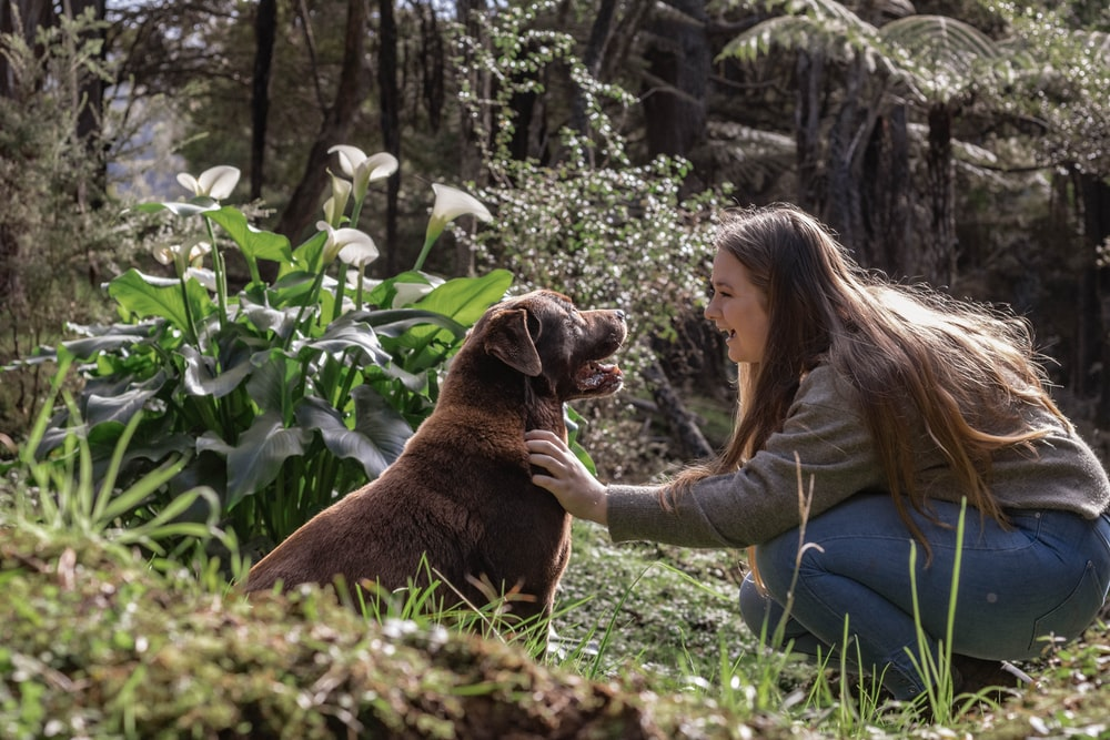 woman in gray long sleeve shirt sitting beside brown short coated dog on green grass field