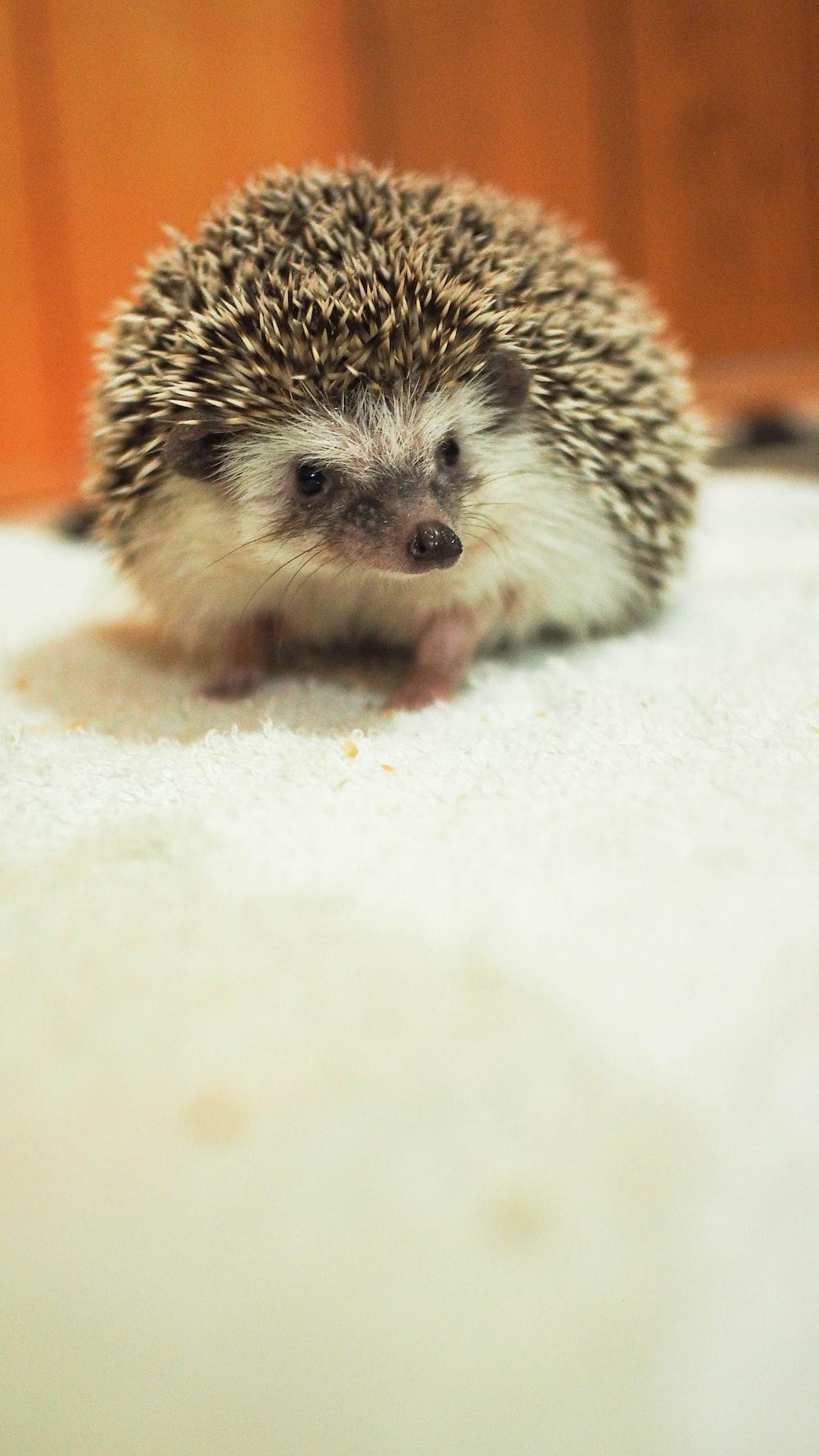 hedgehog on white sand during daytime