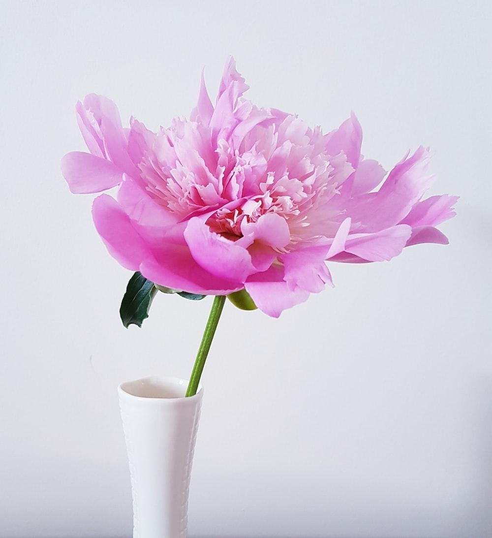 pink flower in white ceramic vase