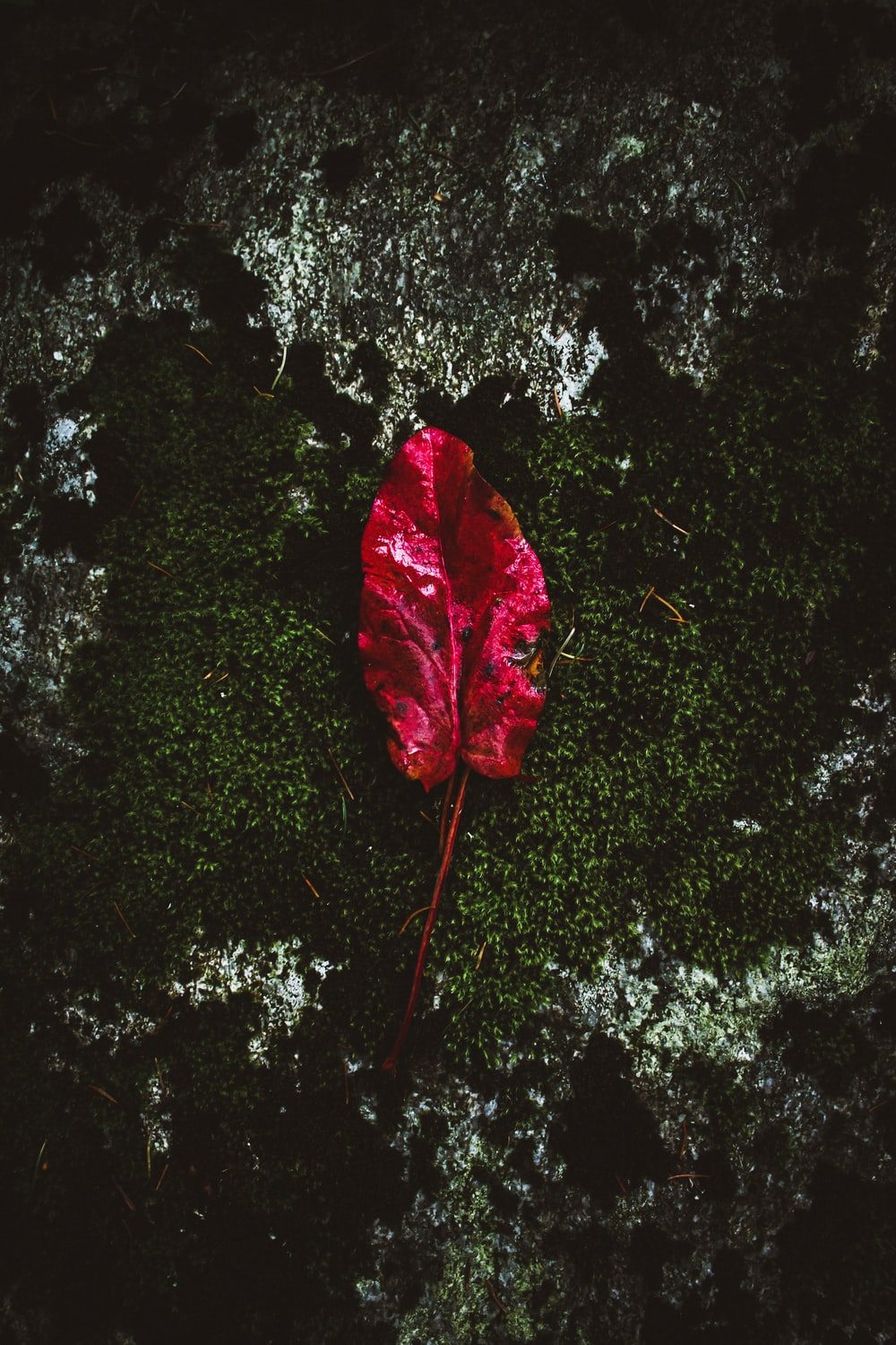 red leaf on green plant