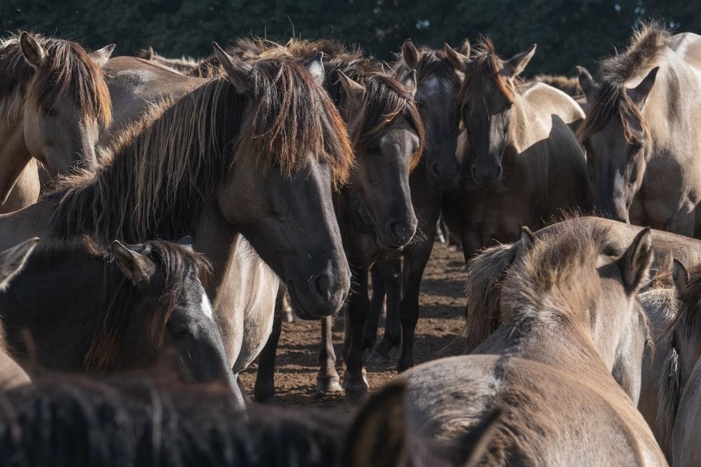 horses eating grass during daytime