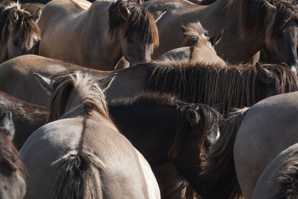 brown and black horses on brown field