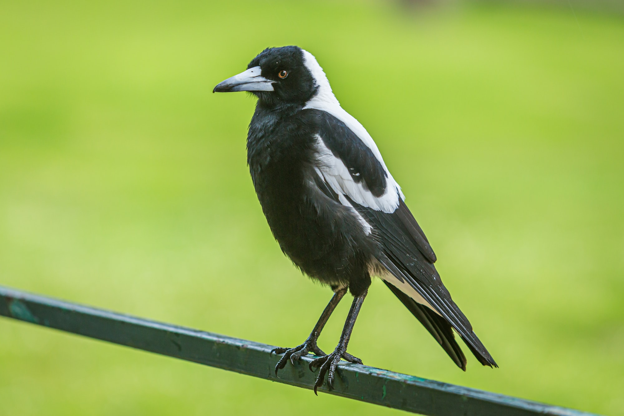 Tales from the Magpie Nest (Epilogue)