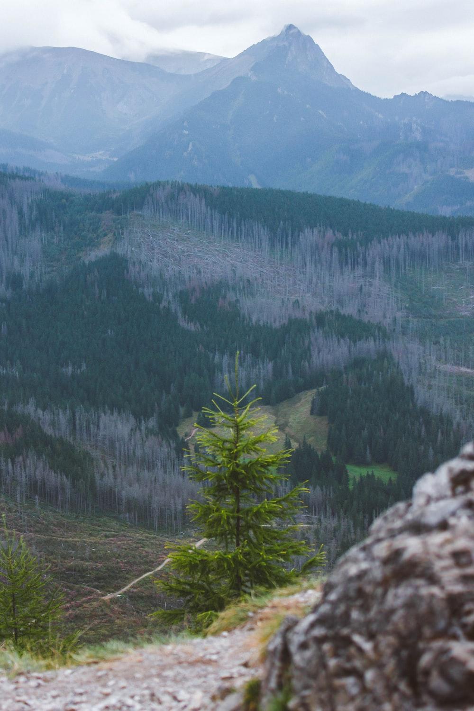 green pine tree on mountain during daytime