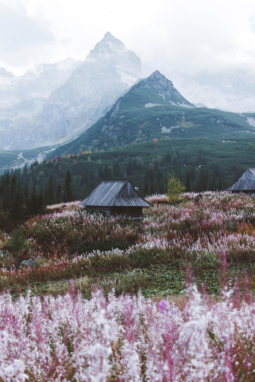 purple flower field near green mountain during daytime