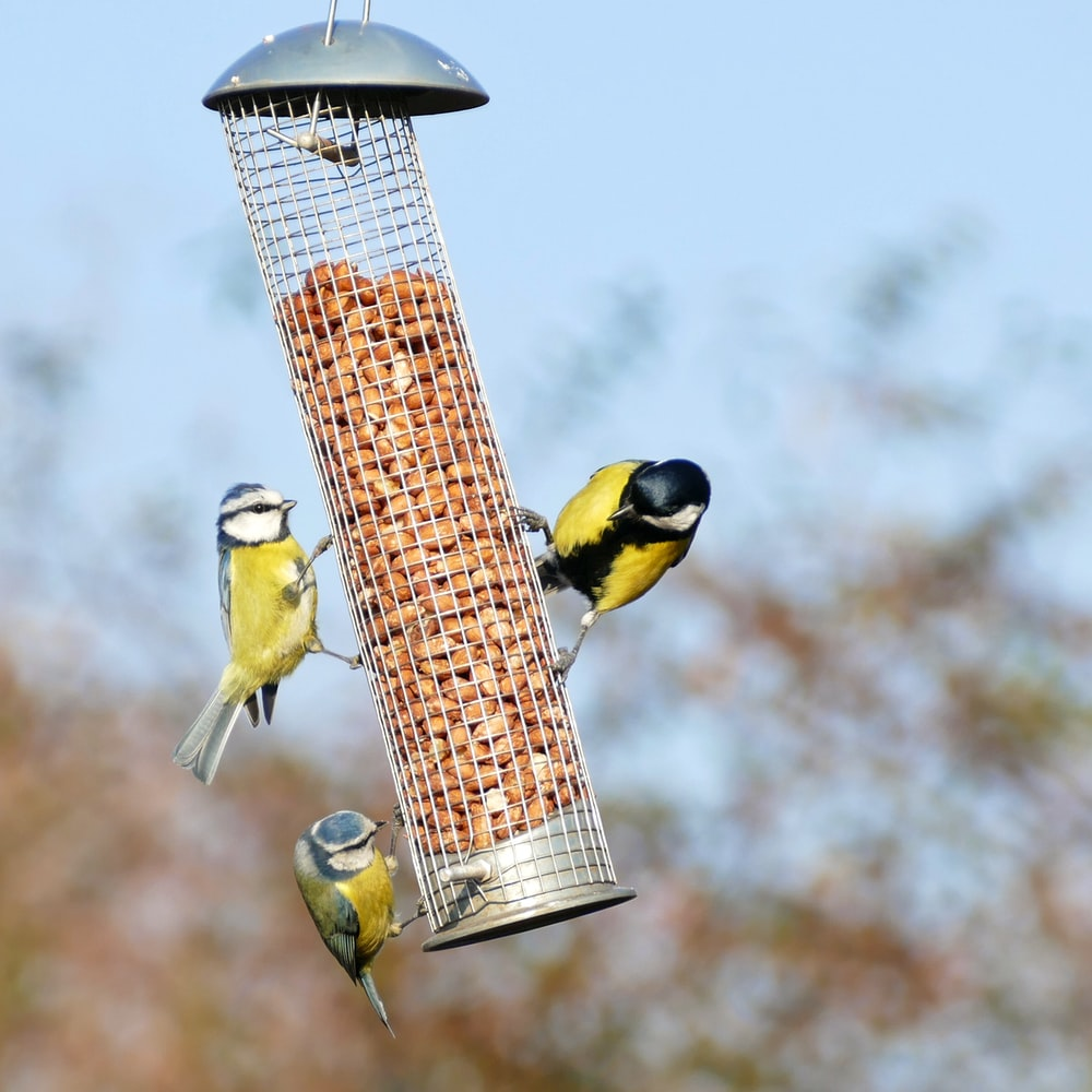 yellow and black bird on brown and white bird feeder