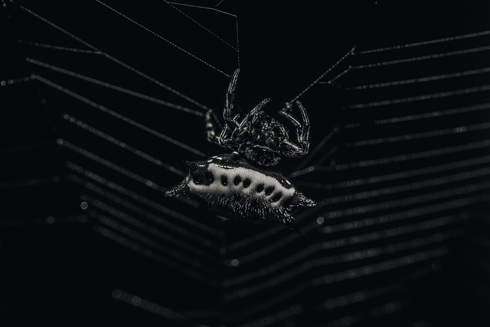 black and white spider on web in close up photography