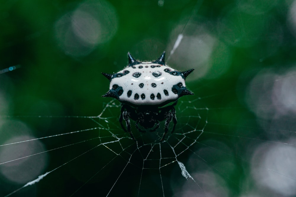 white and black spider web in close up photography