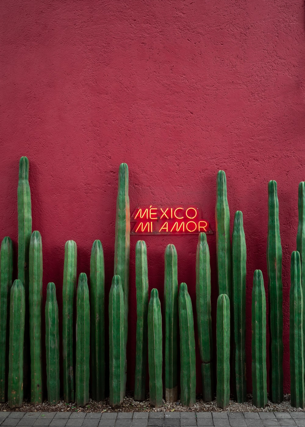 red painted wall with green cactus plants