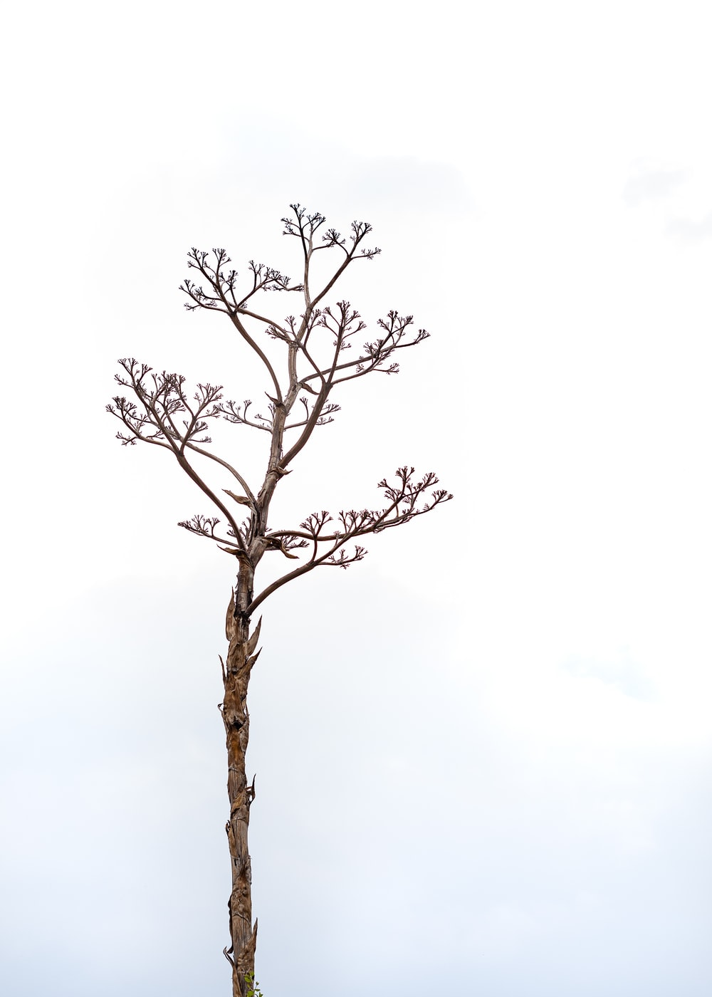 brown leafless tree under white sky