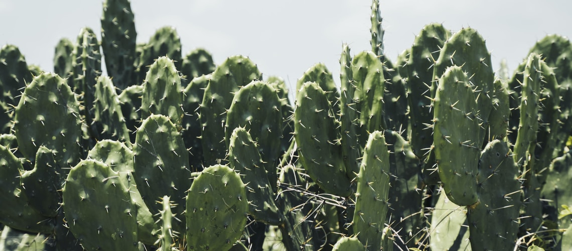 green cactus plant under white sky during daytime