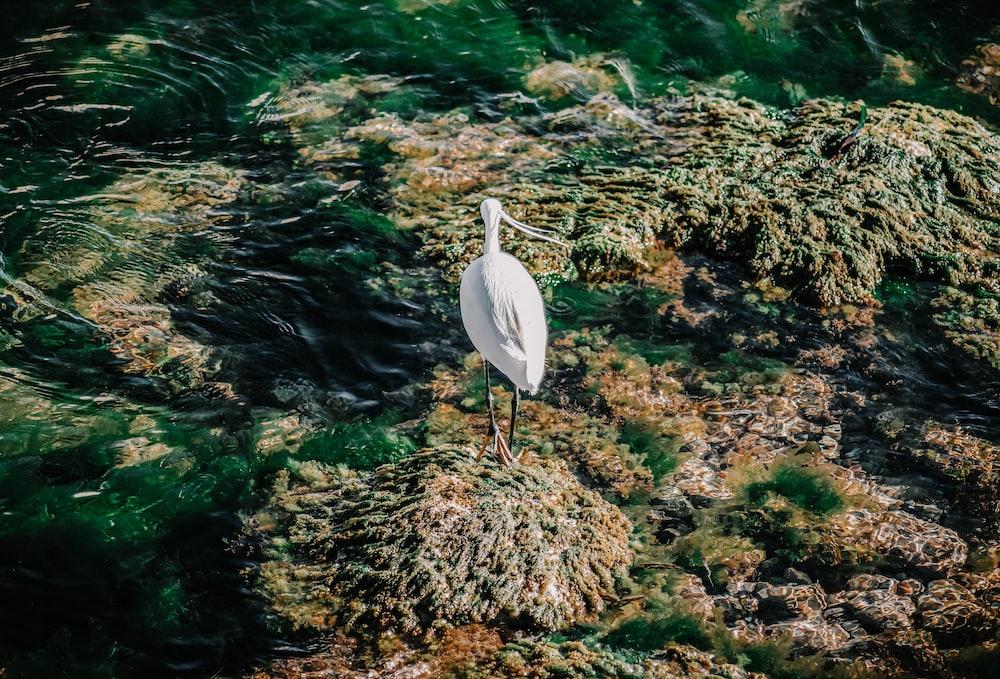 white bird on brown grass