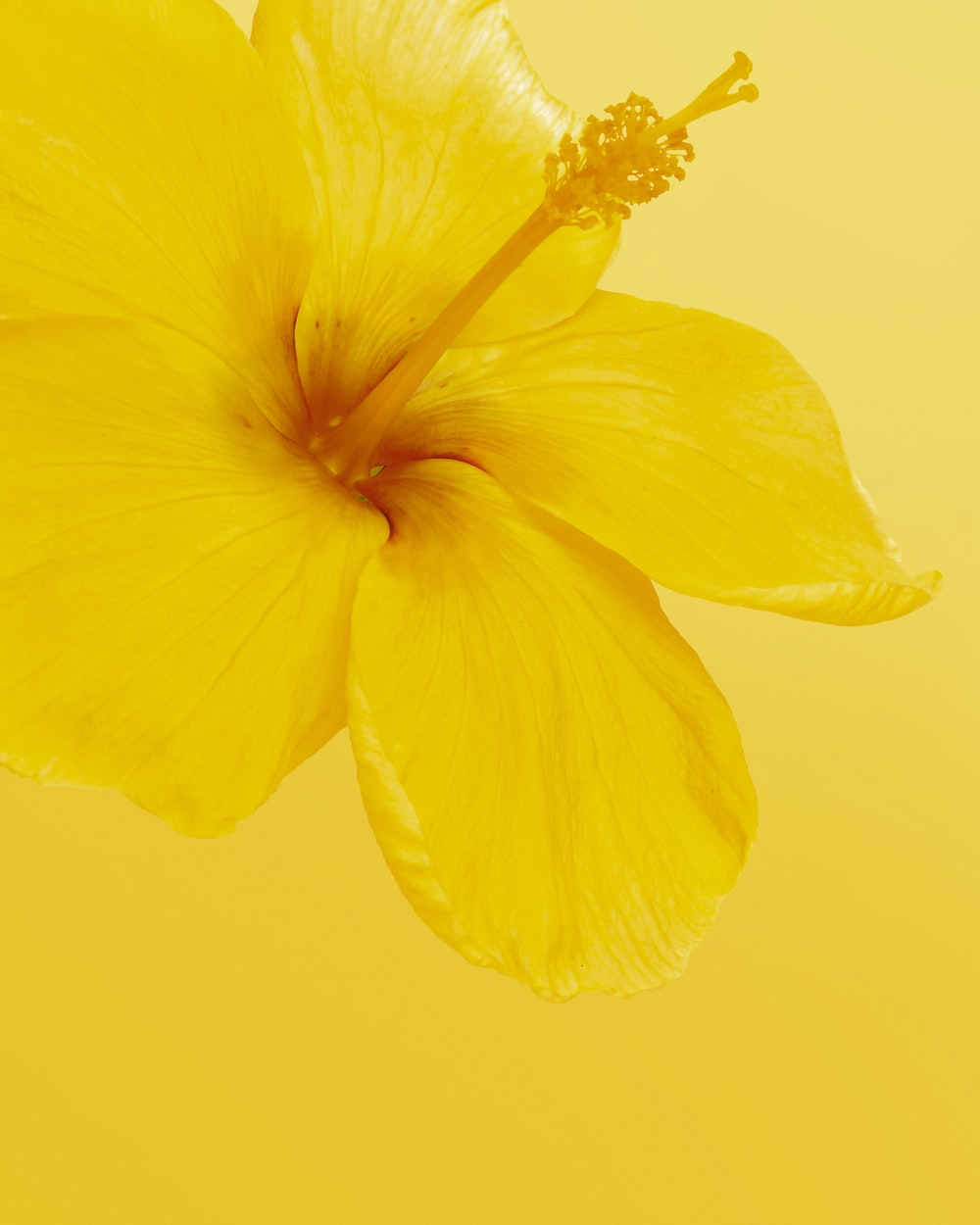 yellow flower with yellow background