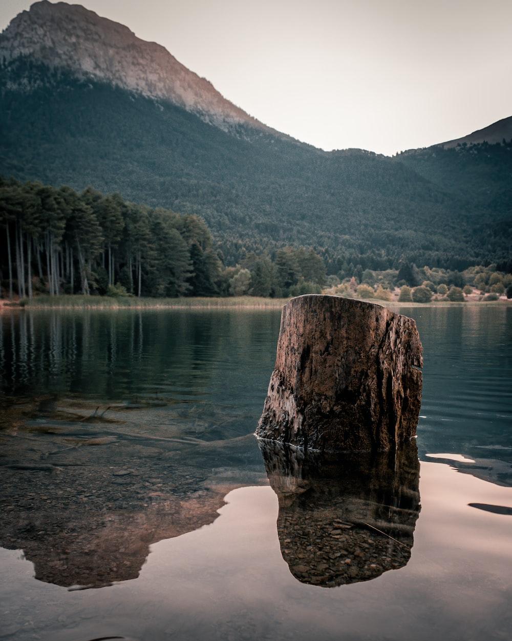 brown tree log on lake