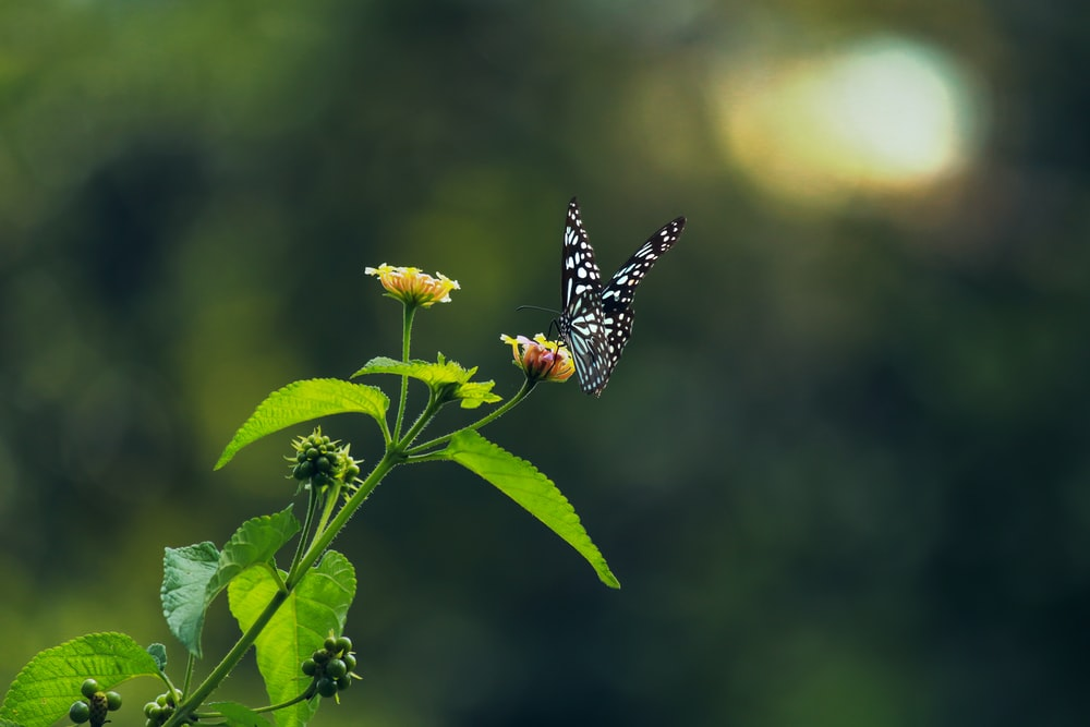 black and yellow butterfly perched on yellow flower in close up photography during daytime