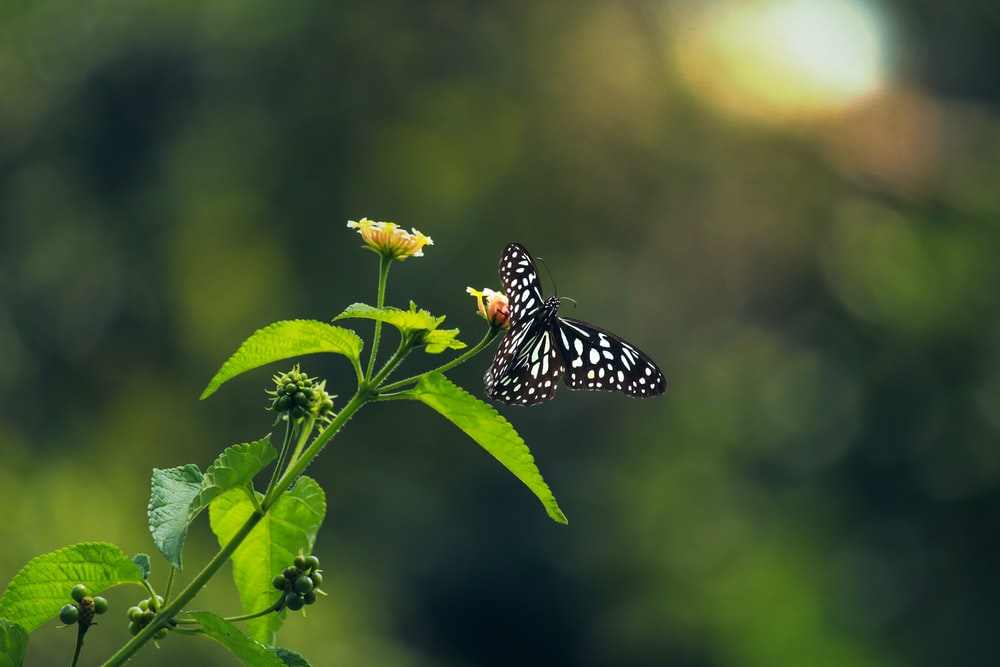 black and white butterfly perched on yellow flower in close up photography during daytime
