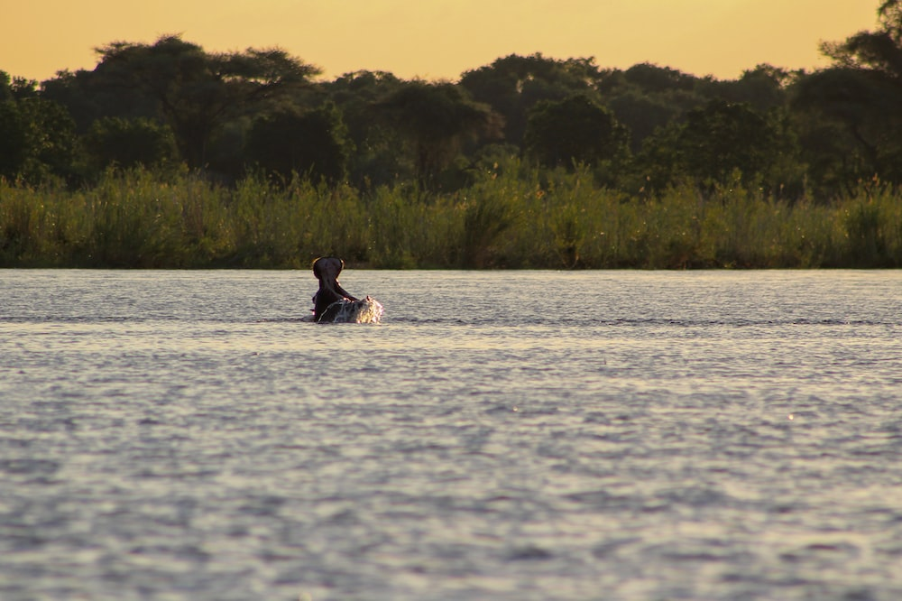 person in black shirt sitting on white surfboard on body of water during daytime