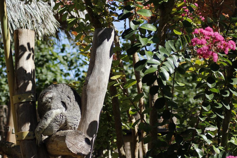 gray bear plush toy on brown tree branch