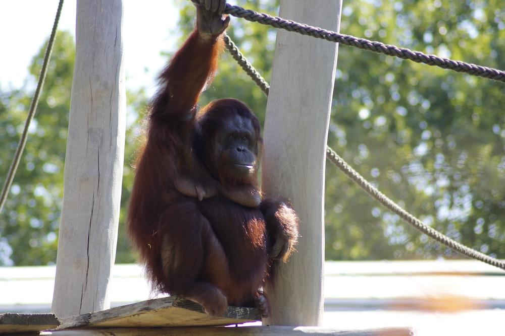 brown monkey hanging on rope during daytime