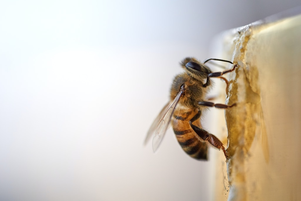 Miele senza api MeliBio