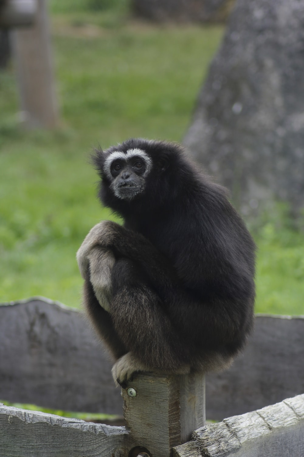 black and brown monkey on brown tree branch during daytime