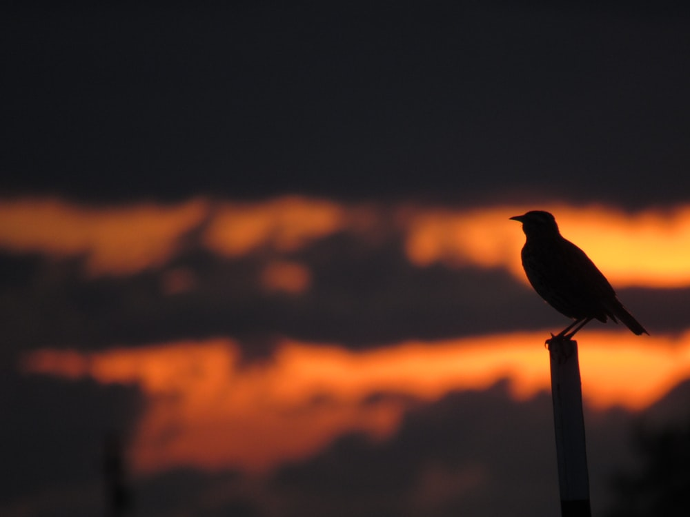 silhouette of bird on gray metal post during sunset