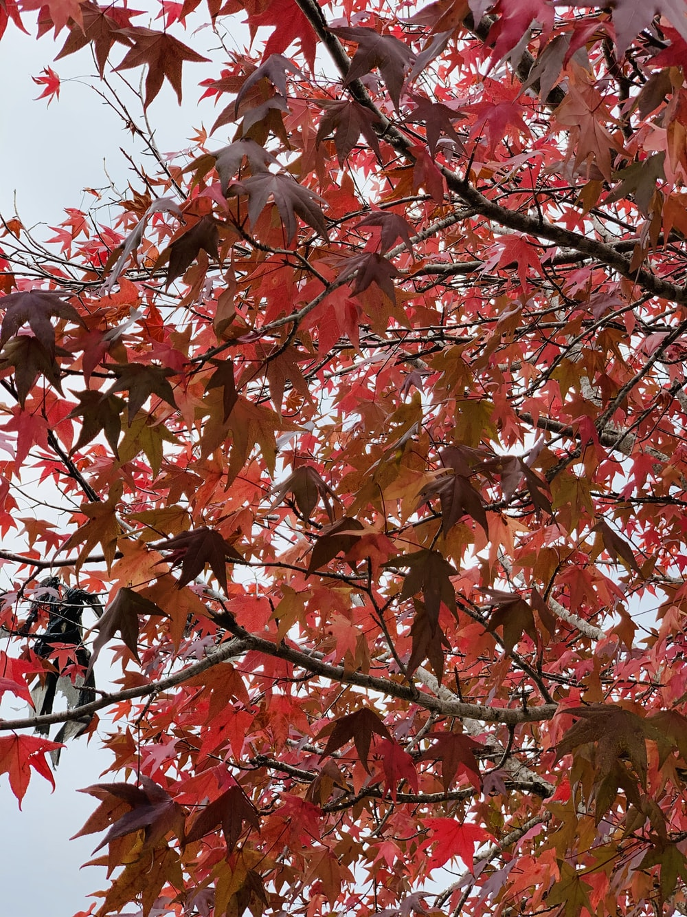 red and brown leaves tree