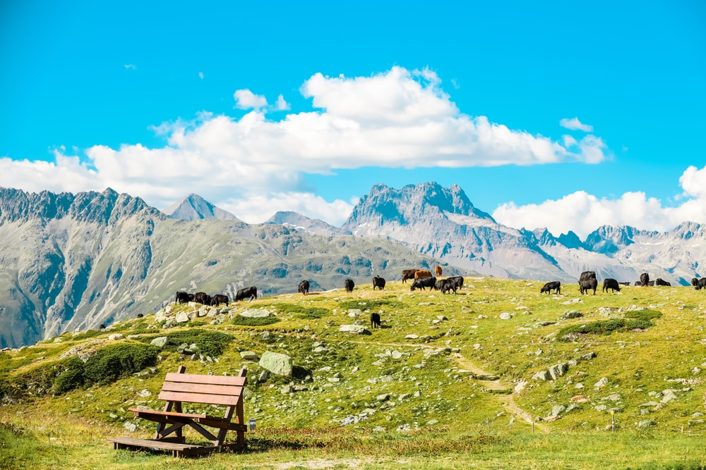 brown wooden bench on green grass field near mountains under blue sky during daytime