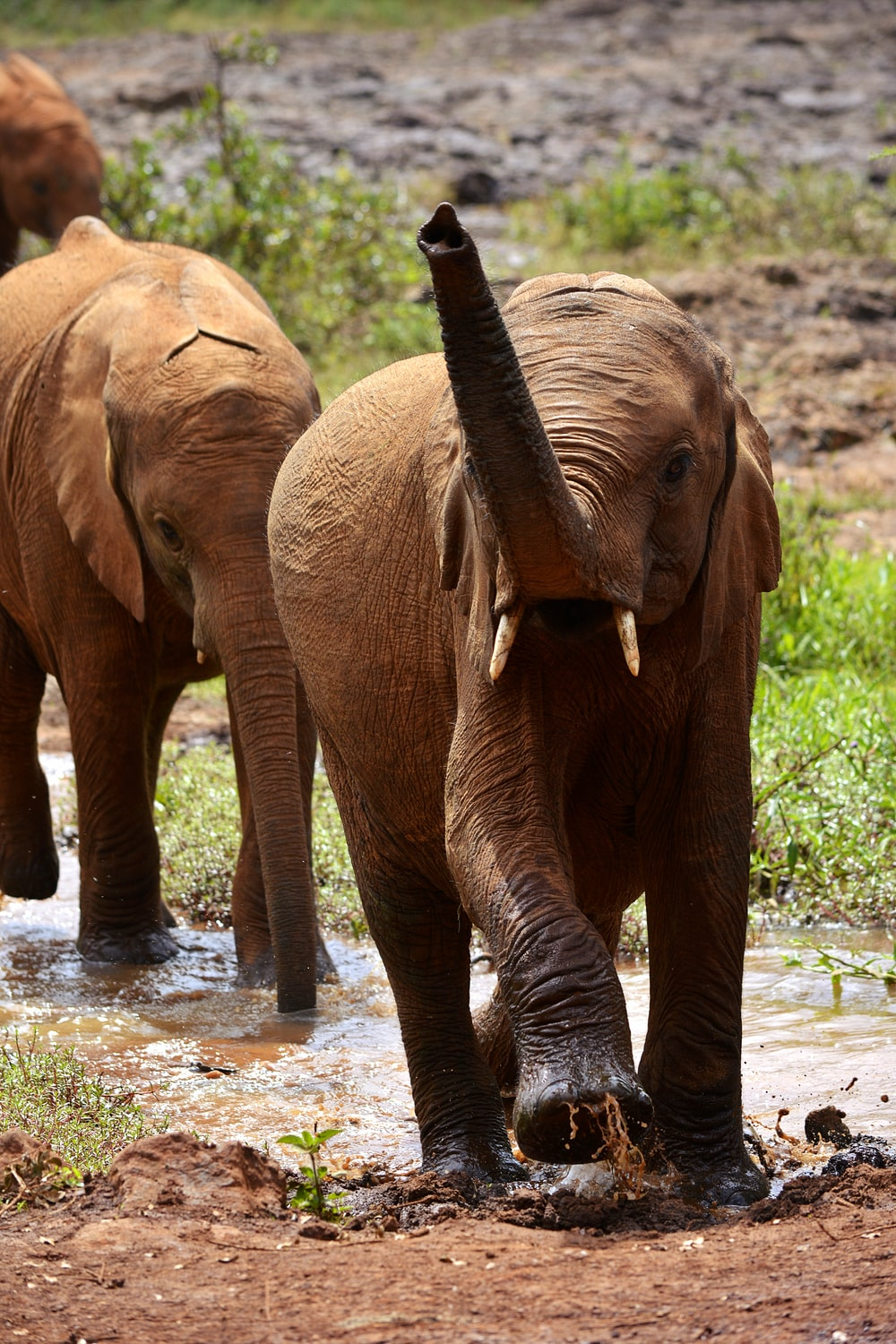 2 brown elephants on river during daytime