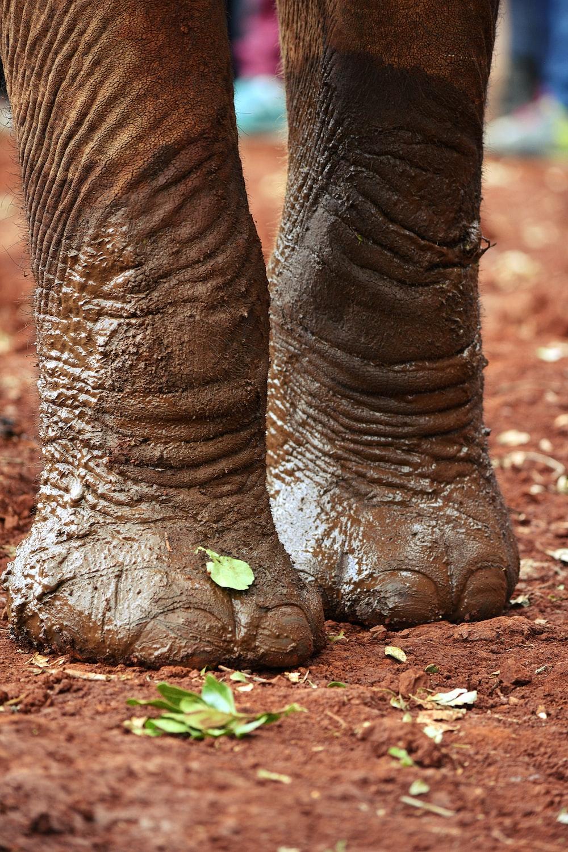 brown elephant lying on ground