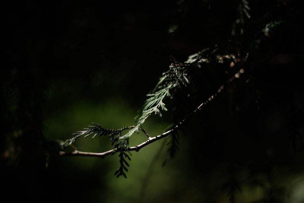 green tree branch in tilt shift lens