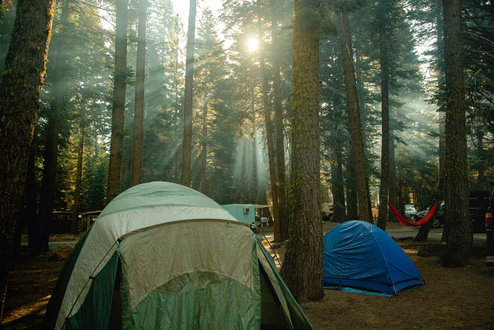 green and gray tent in forest during daytime